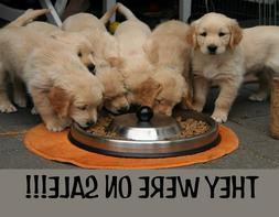 METAL FRIDGE MAGNET They Were On Sale Cats Kitten Kittens Hu